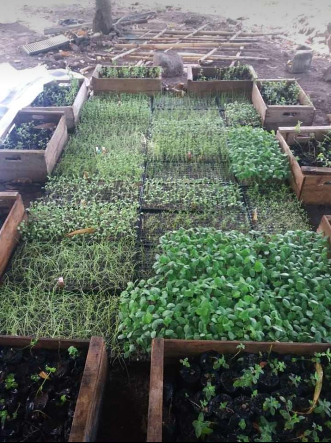 Venta de pilones de Loroco y hortalizas