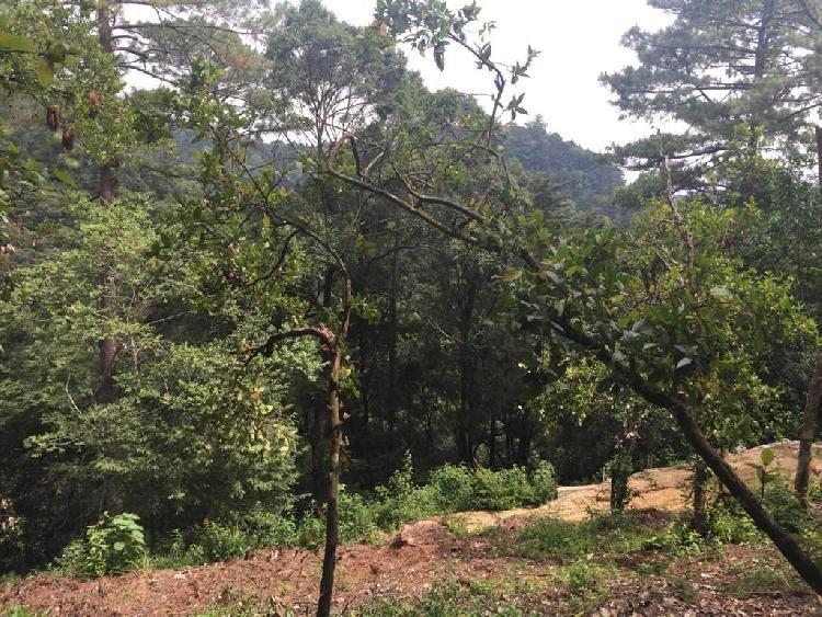 Terreno en venta en Labor de Castilla Mixco Guatemala Venta