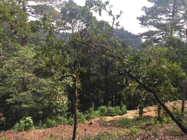 Terreno en venta en Labor de Castilla Mixco Guatemala